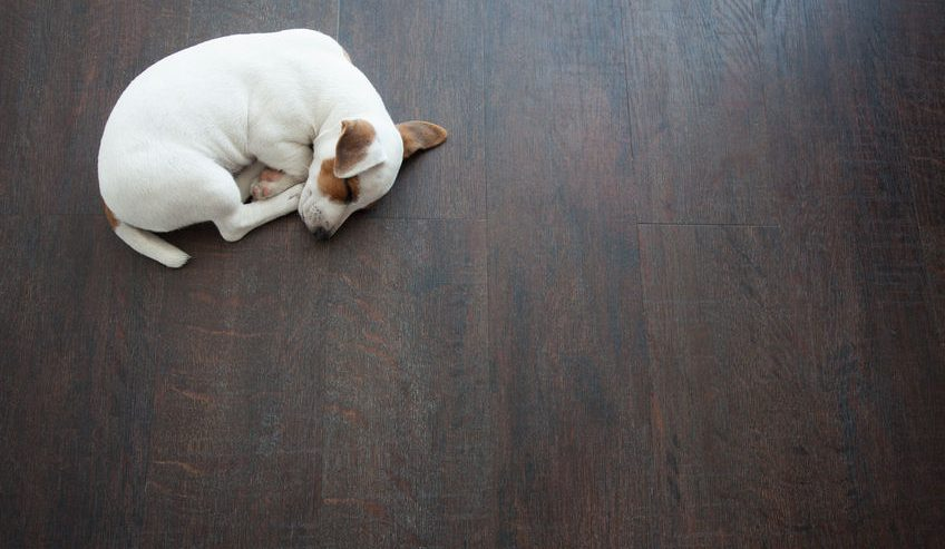 puppy sleeping on floor